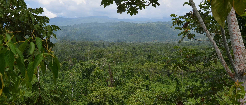 Panaoramablick über Regenwald mit Baum im Vordergrund