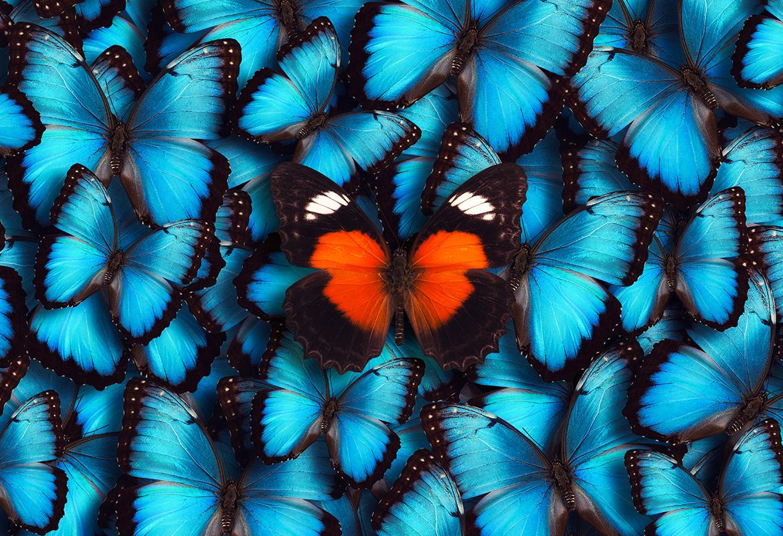 Roter Schmetterling mit blauen Schmetterlingen