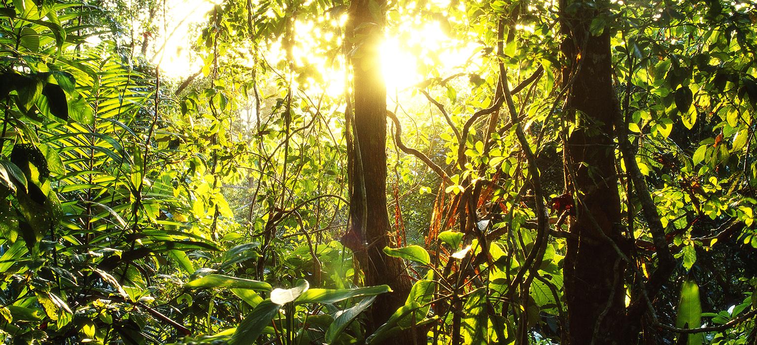 Sonnenaufgang im Urwald