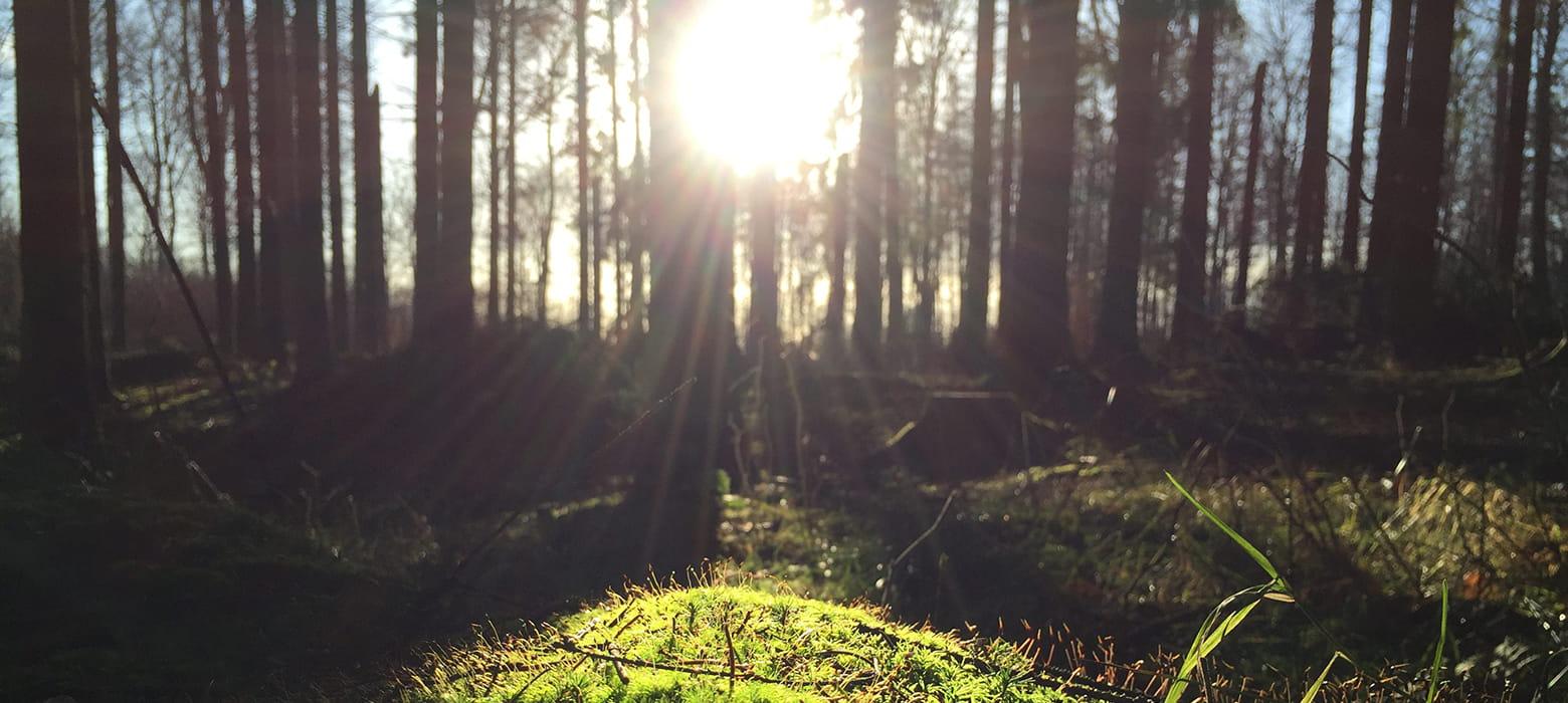 Sonnenstrahlen, die durch einen Wald scheinen